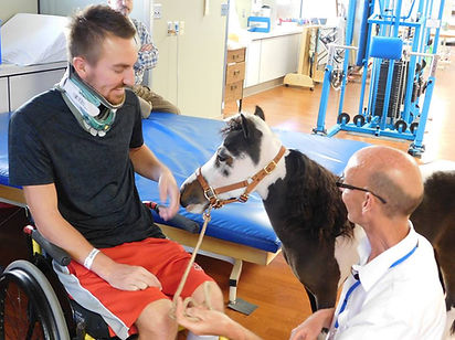 Triple B Foundation miniature horse Domi providing pet therapy at St. Alphonsus Boise Medical Center