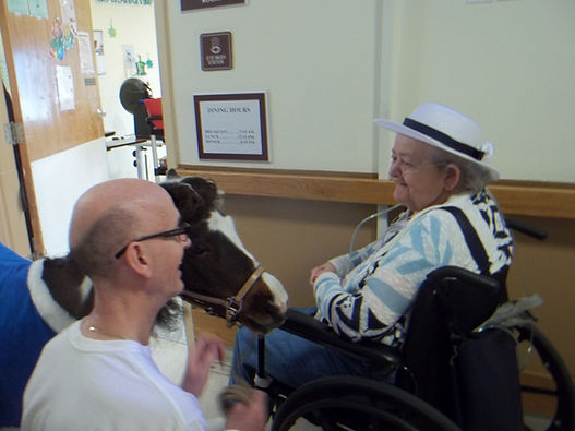 Triple B Foundation miniature horse Domi providing pet therapy to resident at local nursing home