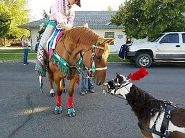 Triple B Foundation for Pet Therapy miniature horse Domi greeting a new friend at a local parade