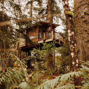 The Squirrel's Nest: Add This Washington Treehouse Airbnb to Your Wanderlist