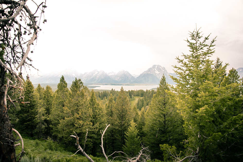 Grand Teton National Park, Tetons, Jackson Hole, Wyoming, Signal Mountain
