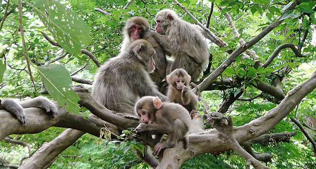 121718_KB_macaques_feat.jpg
