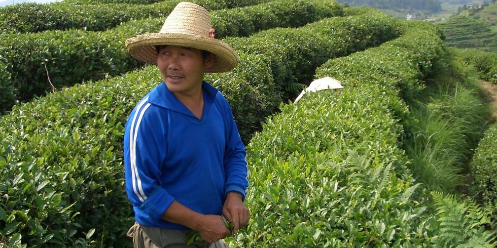 The Black Teas of China...A Virtual Tea Tasting 6/5/21 @ 4:00 PM EST...