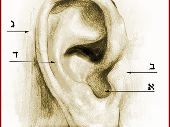 תנוך אוזן