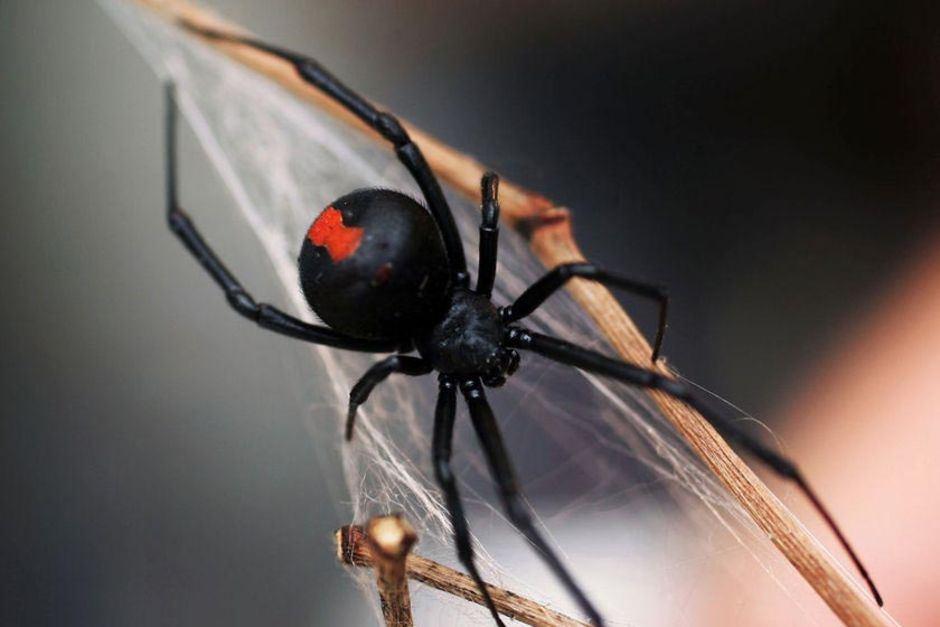 background - spider.jpg
