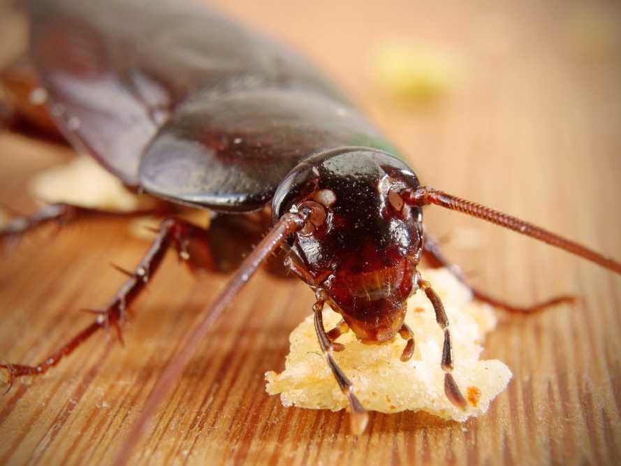 background cockroach 2.jpg