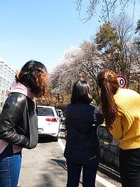 2019 벚꽃 2.jpg