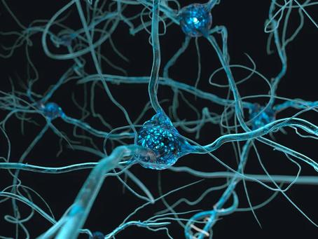 Plasticité Cérébrale: Le Cerveau, C'est Fantastique