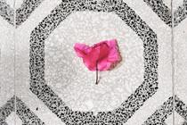 WORKSHOP 3 // FLOWERS