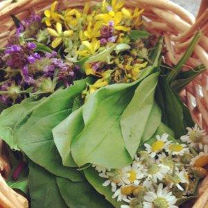 My View From the Weeds: Community Herbalism