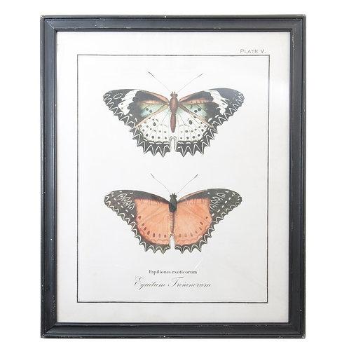 Tableau deux papillons cadre noir