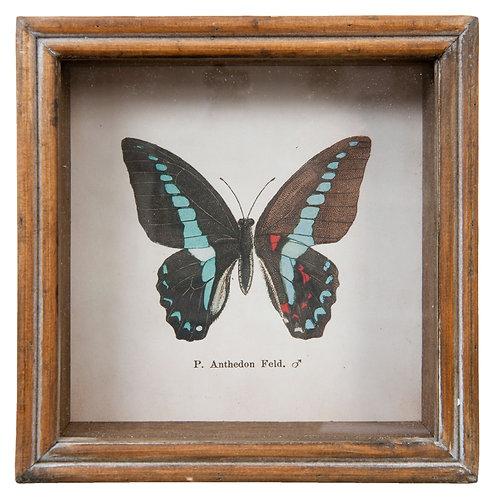 tableau papillon cadre en bois