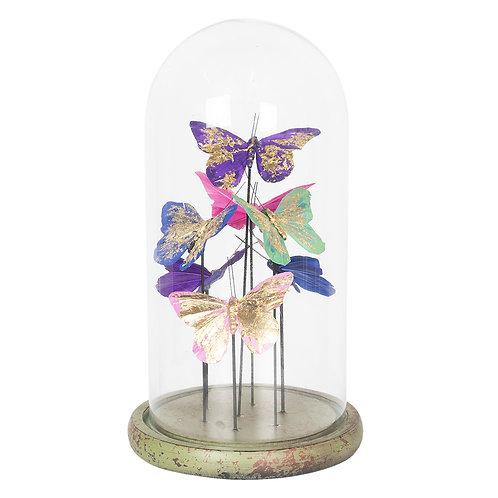 Papillons multicolores sous cloche en verre