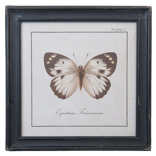 Tableau un papillon cadre noir