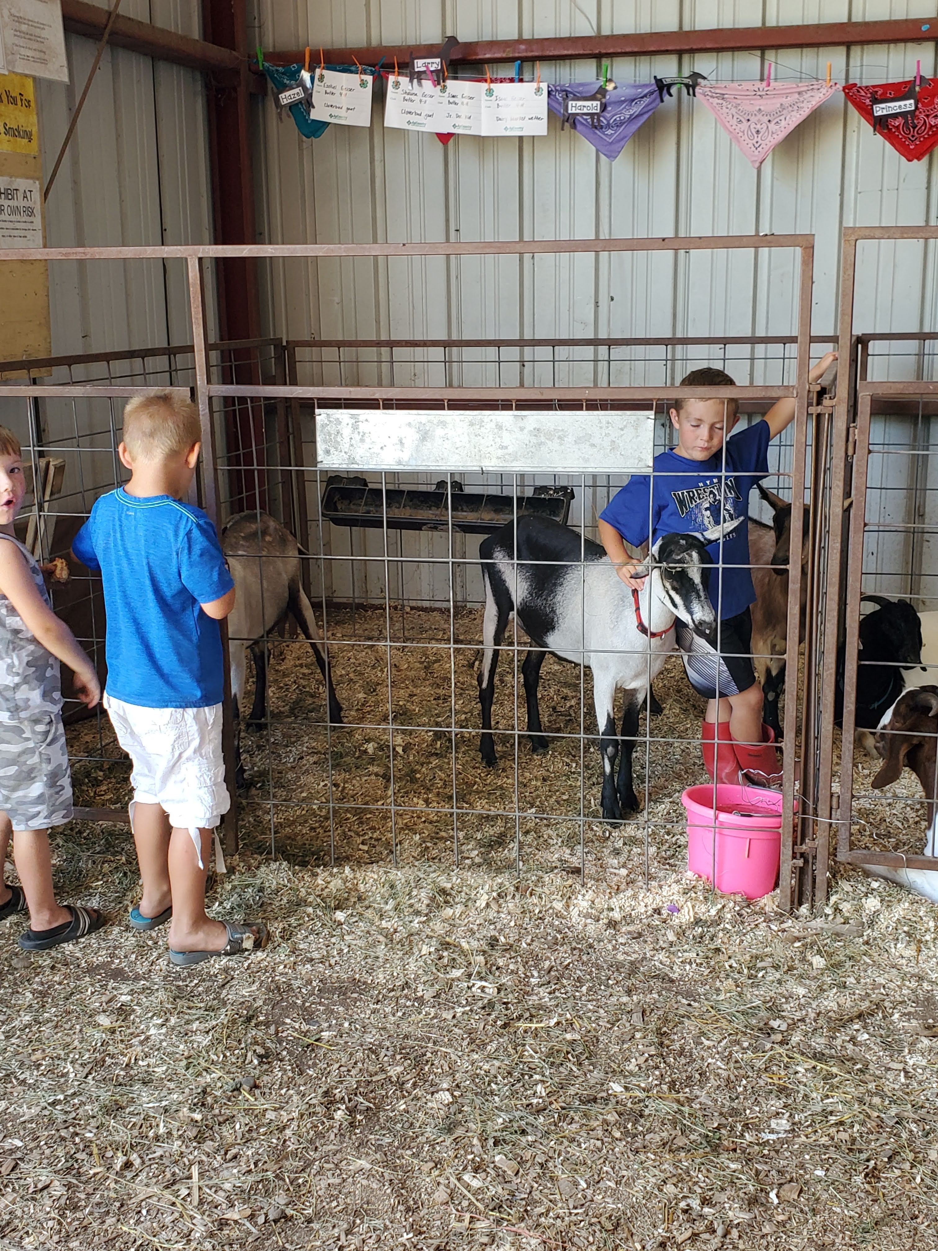 EOT County Fair Otter Tail County Fair in Minnesota