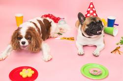 poochie-party-treats