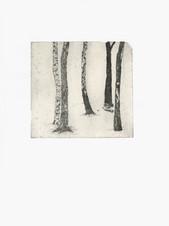 woodserie6 copy.jpg