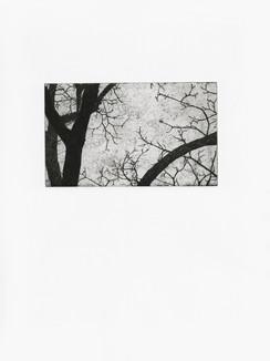 woodserie10 copy.jpg