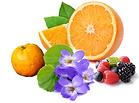 pignolo frutt.png