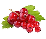 ribes.png