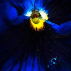 The Night Flower