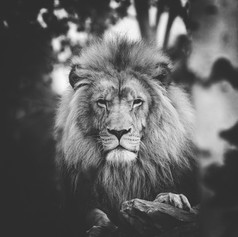 The Majestic King