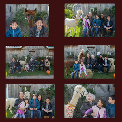 Families with Alpacas