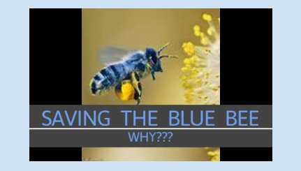 Saving The Blue Bee.png