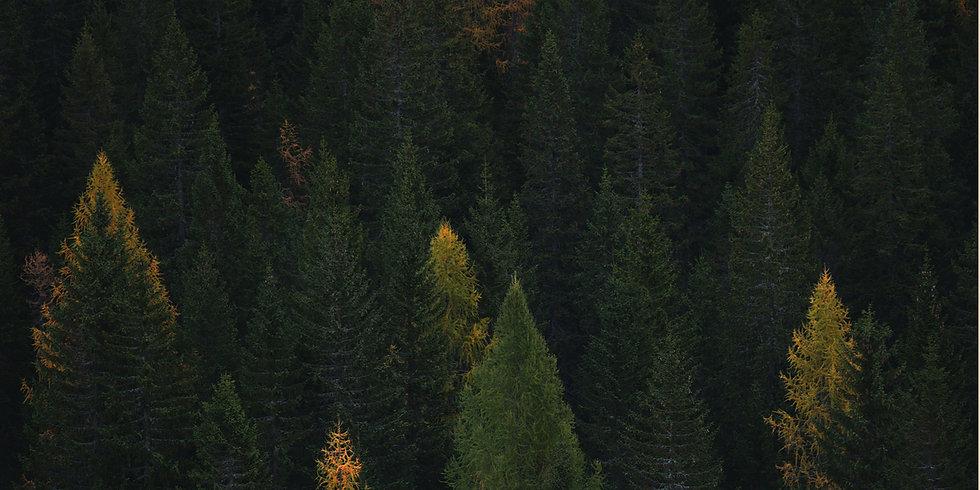forest-4factspg.jpg