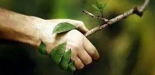Goûter naturo autour de la présentation de la naturopathie mercredi 14 juin à 17h30