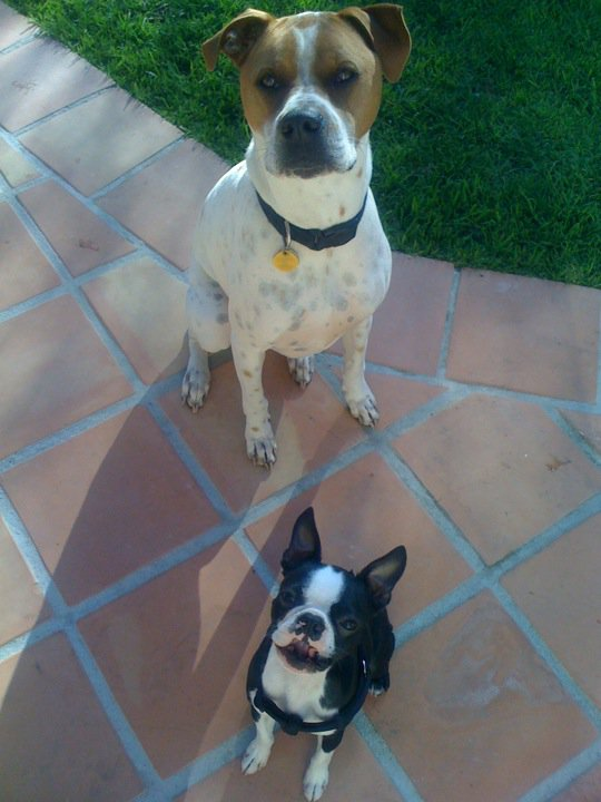 harley and poppy