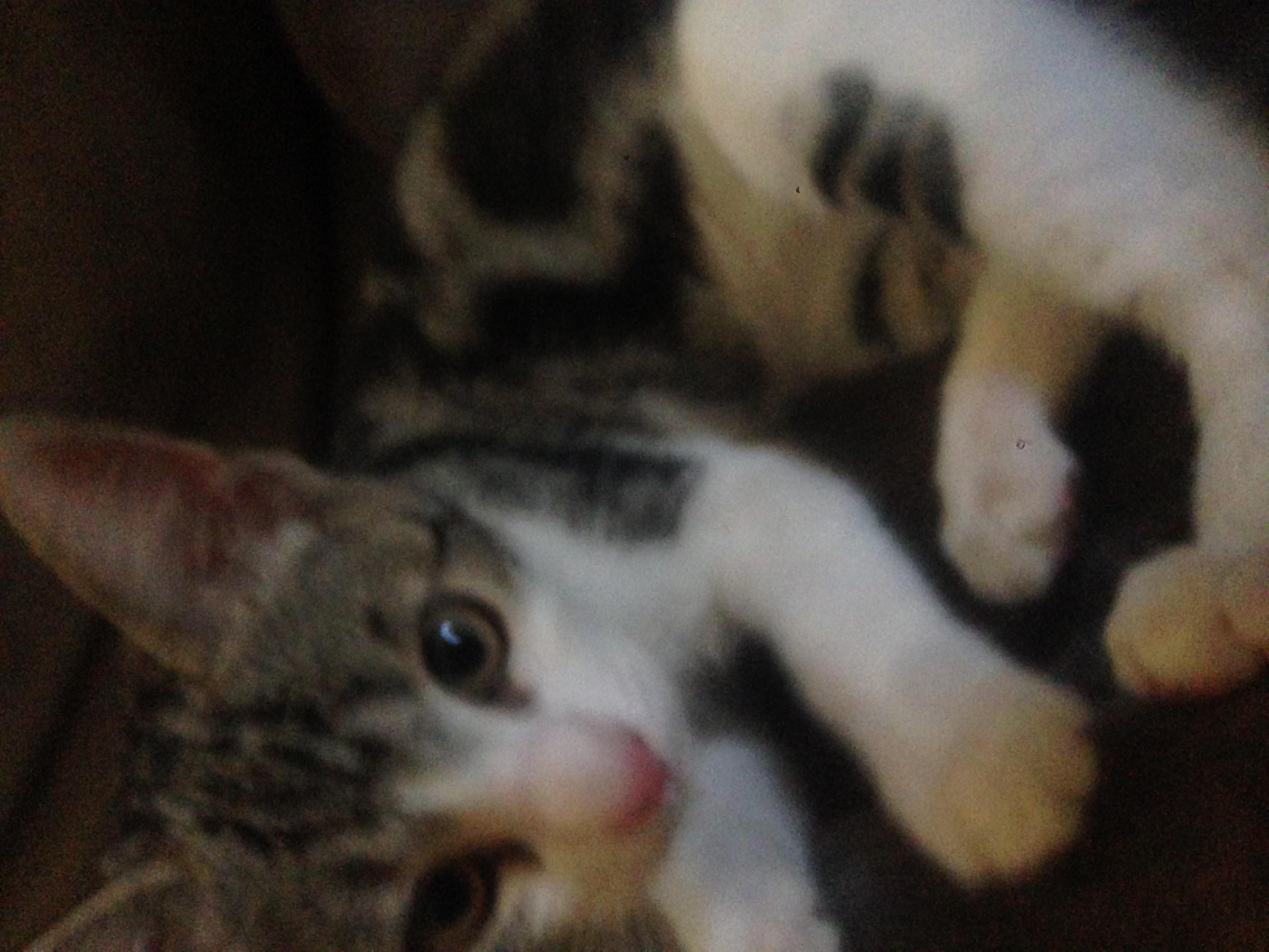 clients kitten
