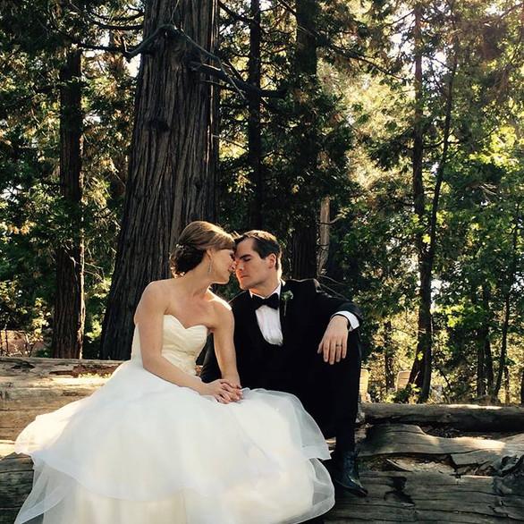 CC Forest Back Drop Pine Rose Weddings z