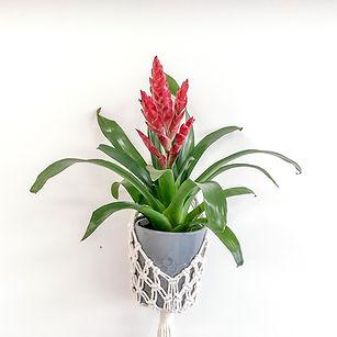 Pot plant in hanging macrame