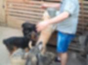 Доктор Евдокимов ежемесячно помогает собачьему приюту в Запорожье
