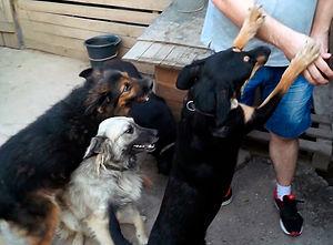 Помогай приюту для собак-инвалидов, как доктор Евдокимов!