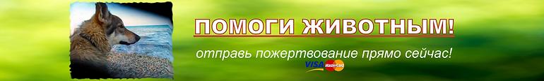 баннер пожертвования собак.png