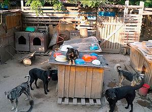Помоги приюту для собак-инвалидов! Доктор Евдокимов призывает запорожцев не оставаться равнодушными!