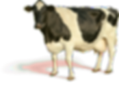 cow_PNG2135_edited.png