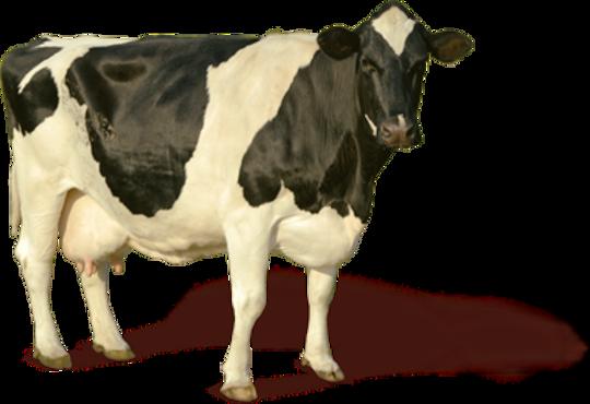 Resultado de imagen de Industria láctea