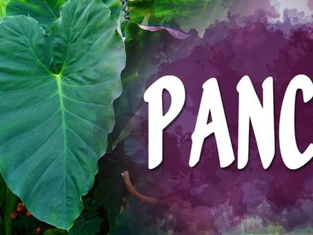 PANC's - Plantas Comestíveis