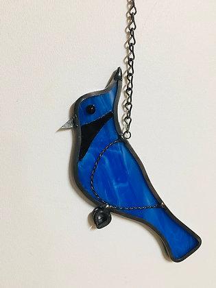 """Blue Jay -""""Jay"""""""