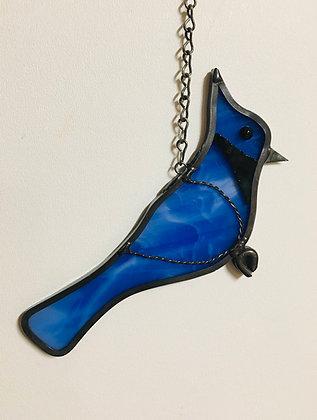 """Blue Jay -""""Ray"""""""