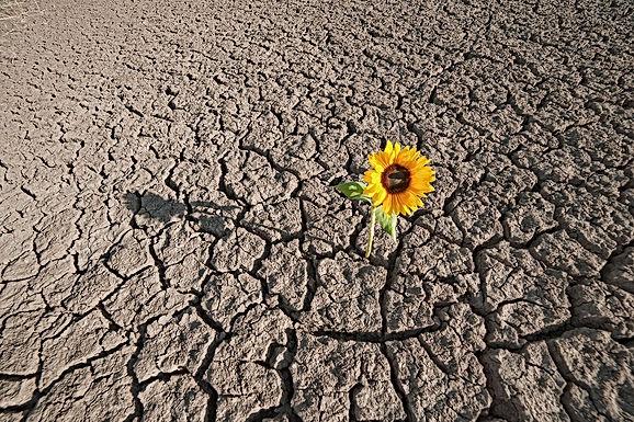 Una flor en el desierto