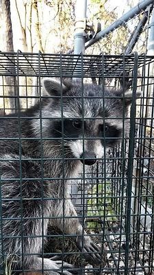 Michigan bat removal