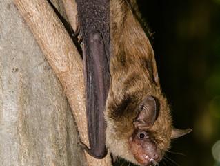 Spring Bat Removal.