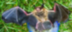 Bat removal Michigan