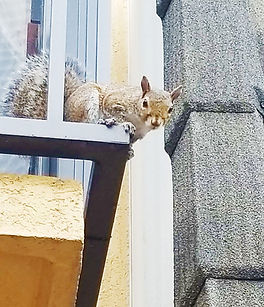 squirel on balcony.jpg