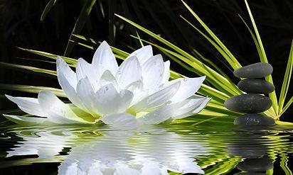papier-peint-zen-fleur-de-lotus.jpg