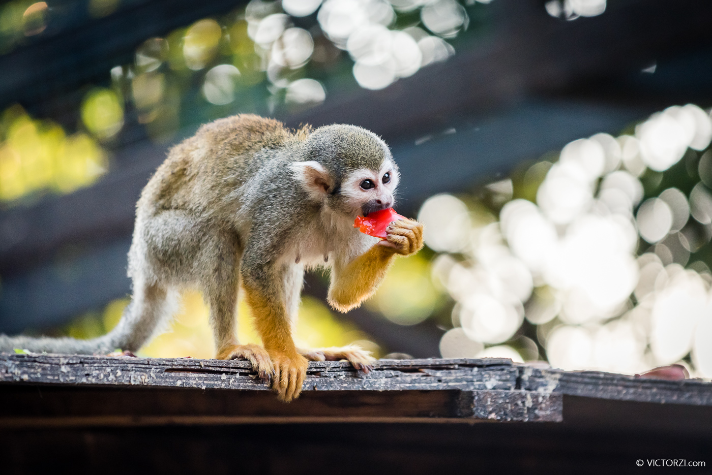 20190921 - Monkeys in Ben Shemen - 1758.